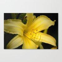 Yellow Beauty #2 Canvas Print