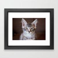 Kitten portrait 2596 Framed Art Print