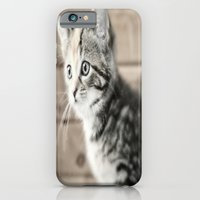 iPhone & iPod Case featuring Kitty Cat by  Alexia Miles photography