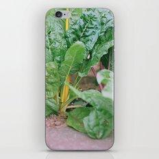Rainbow Chard iPhone & iPod Skin