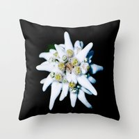 Single isolated Edelweiss flower bloom Throw Pillow