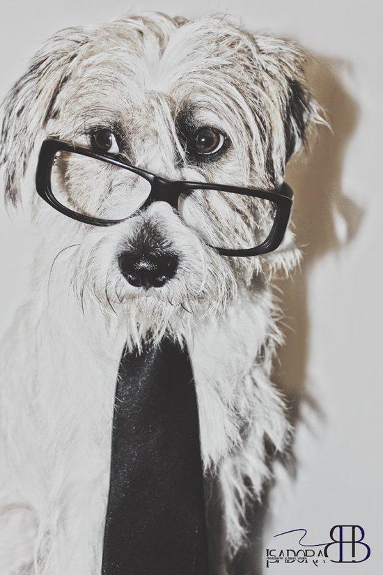 cool dog Art Print