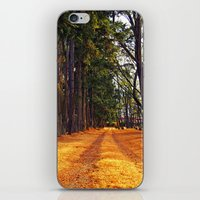 September Path iPhone & iPod Skin