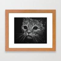 Wide Eyed Cat Framed Art Print