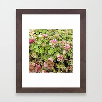 The Fabulous Succulent, Succulent Print, Nature Photography, Pink and Green Wall Art, Garden Print Framed Art Print