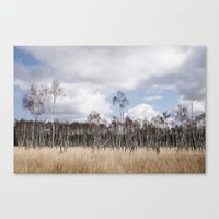 Sunlight on Birch trees among wild grass. Norfolk, UK. Canvas Print