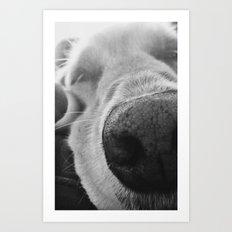 Dog 3 Art Print