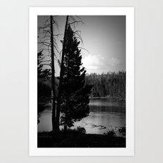 Tree on the Yellowstone Art Print
