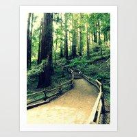 Muir Woods Path Art Print