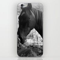 Quiescence iPhone & iPod Skin