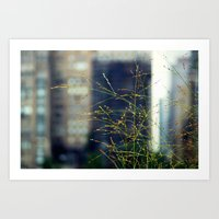 Wisps Of Weeds In The Ci… Art Print