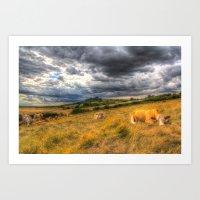 The Resting Cows Art Print