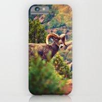 iPhone & iPod Case featuring Bighorn by Melanie Ann