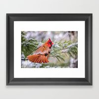 Christmas Cardinal. Framed Art Print