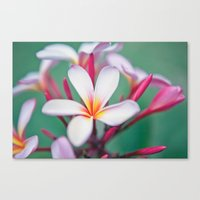 Pink Summer Canvas Print