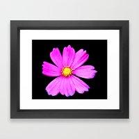 Cosmos Flower Photograph… Framed Art Print