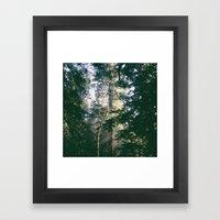 Tree Light Framed Art Print