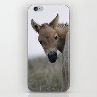 Baby Przewalski's Horse iPhone & iPod Skin