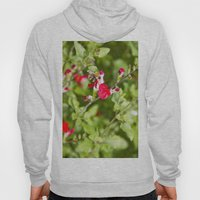 Busy Bee In The Flowers Hoody