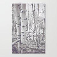 Black and White Aspens Canvas Print