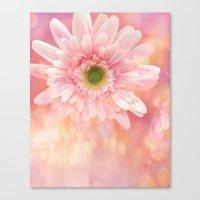 Shabby Chic Daisy Flower Canvas Print