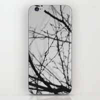 january tree iPhone & iPod Skin