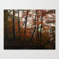 Autumn in the woods 3 Canvas Print