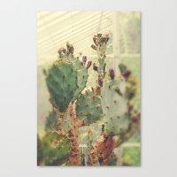 Glass House Cactus Canvas Print