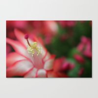Waiting For Bees Canvas Print