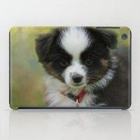 Miniature Australian Shepherd Puppy 3 iPad Case