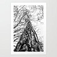 Looking Up (Mono) Art Print