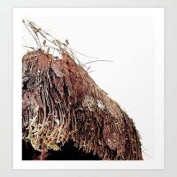 Coco #1 Art Print