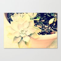 Canvas Print featuring WhiteFlower by Lindsey