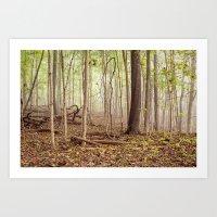 Indiana woods Art Print