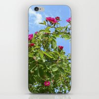 Summer Wild Rose VII iPhone & iPod Skin