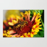 It's A Bee's Life Canvas Print