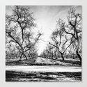 Spooky Row of Trees Canvas Print