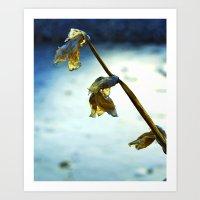 Frozen Flowers Art Print