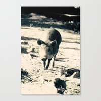 Some Pig Canvas Print