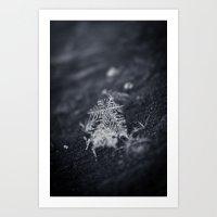 Macro Snowflakes 2 Art Print