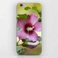 Hardy Hibiscus iPhone & iPod Skin