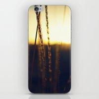 Prairie Sun iPhone & iPod Skin
