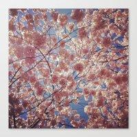 Blossom Series 2 Canvas Print
