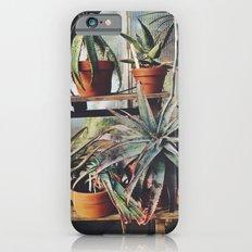 Cactus Wall iPhone 6s Slim Case