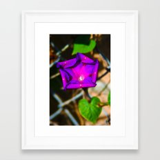 Purple Blossom On A Vine Framed Art Print