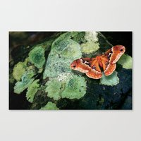 Moth on Rock Canvas Print