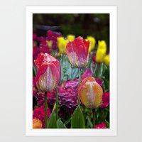 Glass Tulips  Art Print