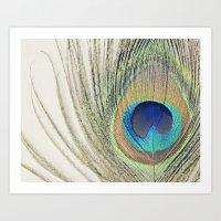 Peacock Feather No.2 Art Print
