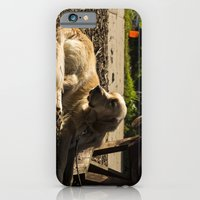 iPhone & iPod Case featuring Dog's Life by Kailey Worf