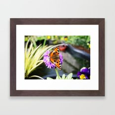 Butterfly on Primula  Framed Art Print